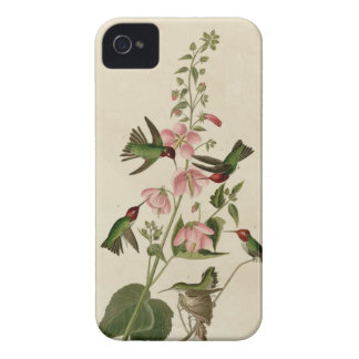 Columbian Hummingbird Case-Mate iPhone 4 Cases