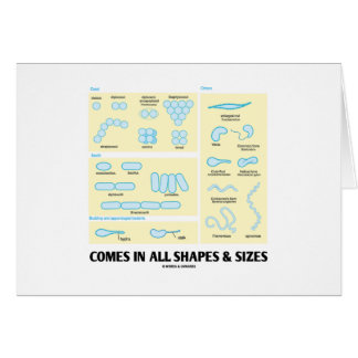 Comes In All Shapes Sizes Bacterial Morphology Card