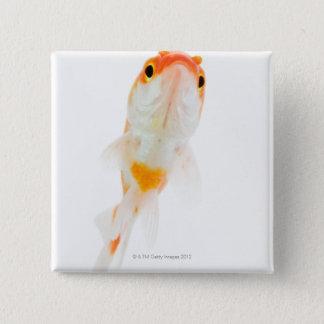 Comet / Comet-tailed goldfish 15 Cm Square Badge