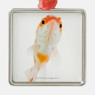Comet / Comet-tailed goldfish Christmas Ornament