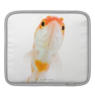 Comet / Comet-tailed goldfish iPad Sleeve
