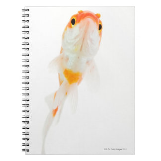 Comet / Comet-tailed goldfish Notebook
