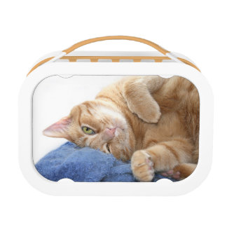 Comfy kitty lunch box