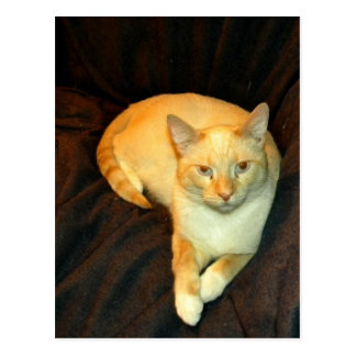 Comfy Kitty Postcard