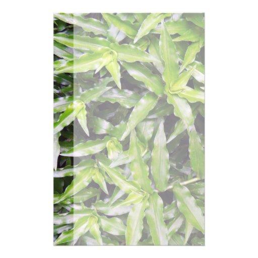 Commelina erecta full color flyer
