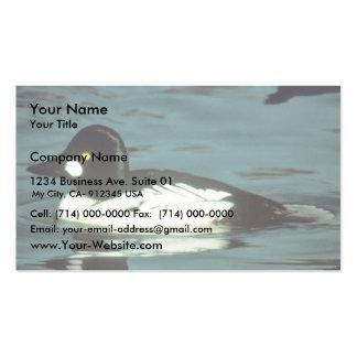Commom Goldeneye Pack Of Standard Business Cards