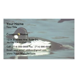 Commom Goldeneye Pack Of Standard Business Cards
