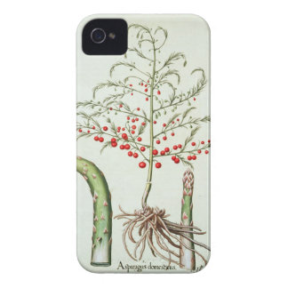 Common asparagus in flower and fruit, from the 'Ho iPhone 4 Covers