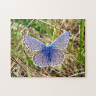Common Blue Butterfly Photo Puzzle with Gift Box