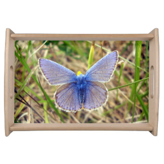 Common Blue Butterfly Serving Tray
