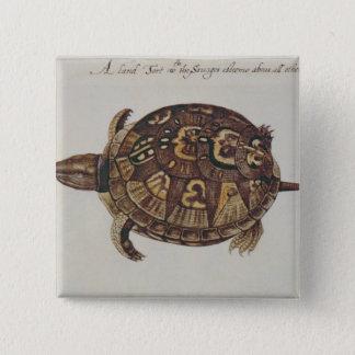 Common Box Tortoise 15 Cm Square Badge