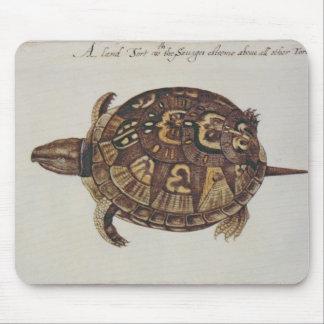 Common Box Tortoise Mouse Mat