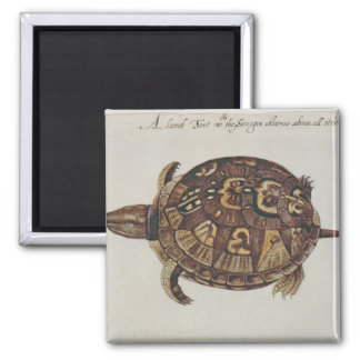 Common Box Tortoise Square Magnet