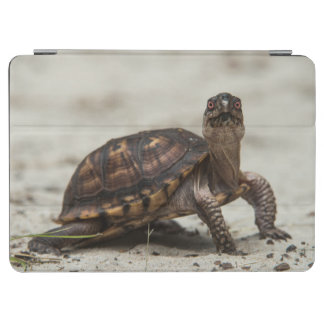 Common box turtle iPad air cover