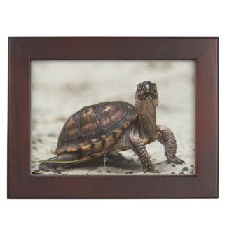 Common box turtle keepsake boxes