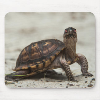 Common box turtle mouse pad