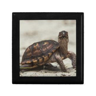 Common box turtle small square gift box