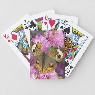 Common Buckeye Butterfly Poker Deck