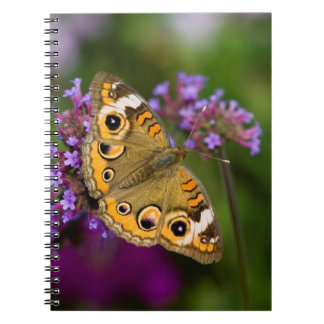 Common Buckeye Notebook