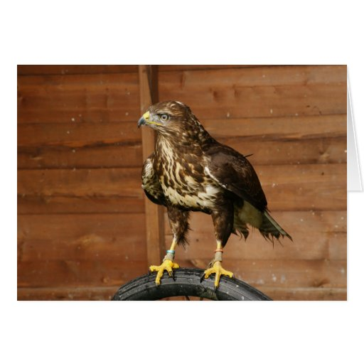 Common Buzzard Bird of Prey Greeting Card
