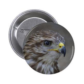 Common Buzzard Portrait 6 Cm Round Badge