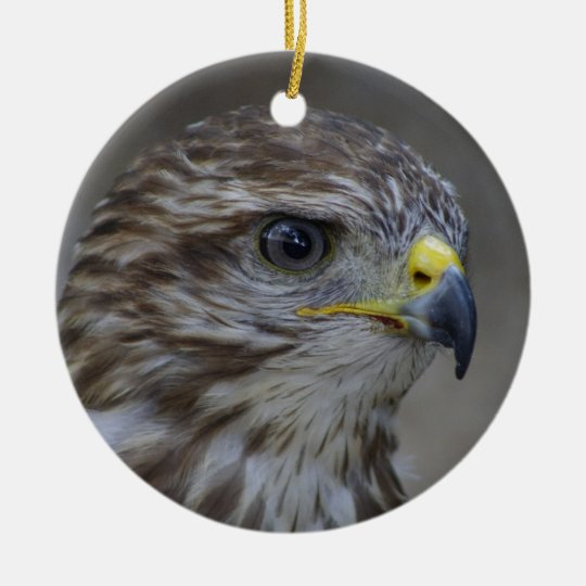 Common Buzzard Portrait Christmas Ornament