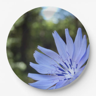 Common Chicory Paper Plates