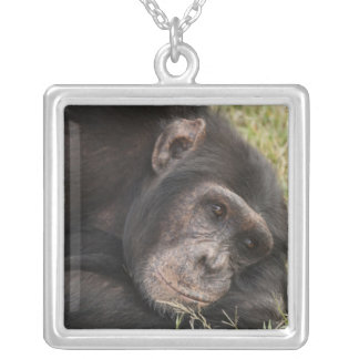 Common Chimpanzee posing resting Personalized Necklace