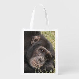 Common Chimpanzee posing resting Reusable Grocery Bag