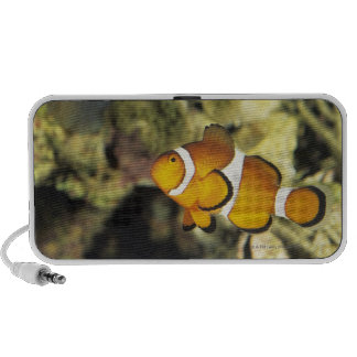 Common clownfish (Amphiprion ocellaris), iPhone Speakers