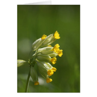 Common Cowslip (Primula veris) Card