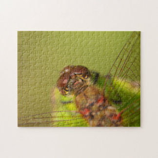 Common Darter Dragonfly Jigsaw Puzzle