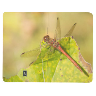 Common Darter Dragonfly Journal