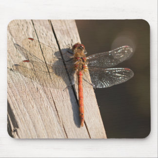 Common Darter Dragonfly Mouse Mat