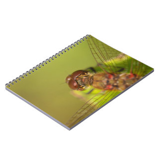 Common Darter Dragonfly Notebook