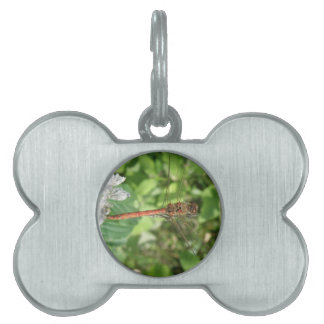 Common Darter Dragonfly Pet Tag