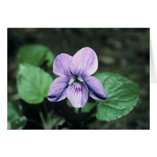 Common Dog-violet Card