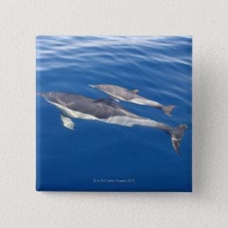Common Dolphin 15 Cm Square Badge