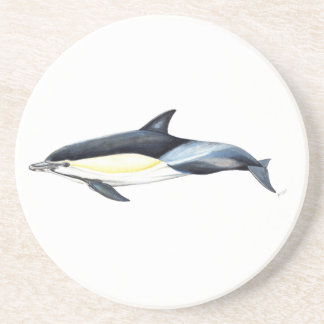 Common dolphin Delphinus delphis Coaster