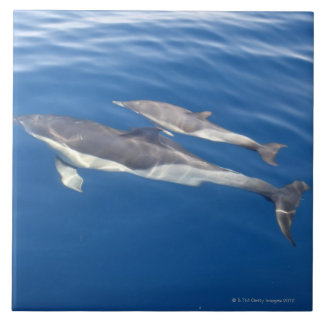 Common Dolphin in the strait Large Square Tile