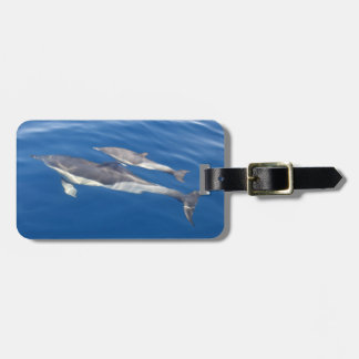 Common Dolphin Luggage Tag