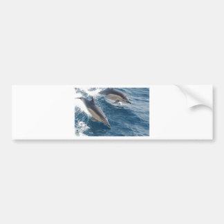 common-dolphins-914 bumper sticker