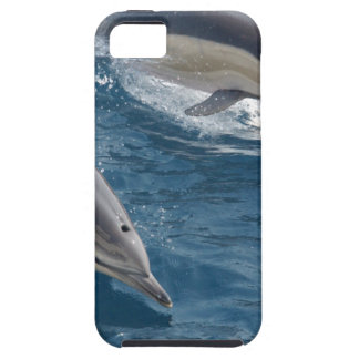 common-dolphins-914 case for the iPhone 5