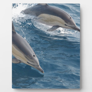 common-dolphins-914 display plaque
