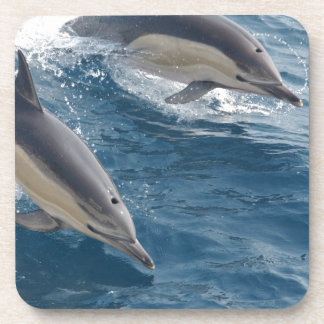 common-dolphins-914 drink coasters