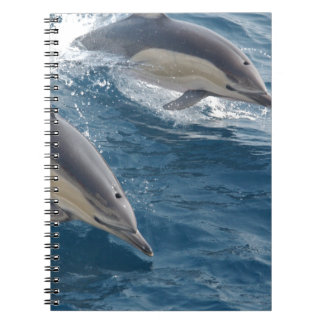 common-dolphins-914 spiral note book