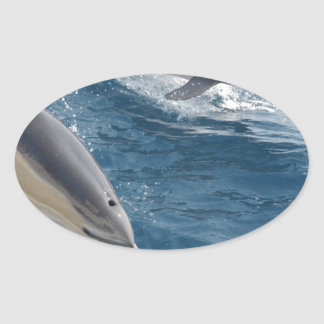 common-dolphins-914 oval sticker