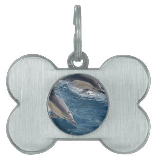 common-dolphins-914 pet tag