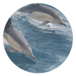 common-dolphins-914 plates