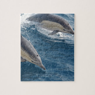 common-dolphins-914 puzzles